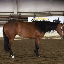 Reining Horses for Sale Ontario - Performance Horse Sales